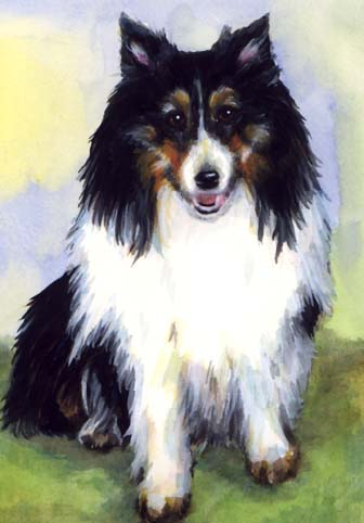 Sheltie Watercolor Portrait Carol Wells
