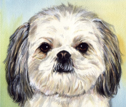 Shih Tau Dog Pet Watercolor Portrait Carol Wells