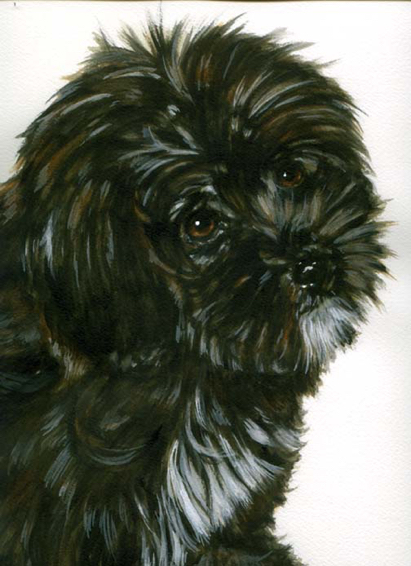 Puppy Watercolor Portrait Carol Wells