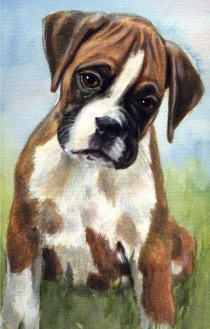 Boxer Puppy Watercolor Carol Wells