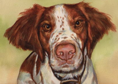 Spaniel Dog Watercolor Carol Wells