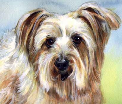 Dog Pet Watercolor Portrait Carol Wells
